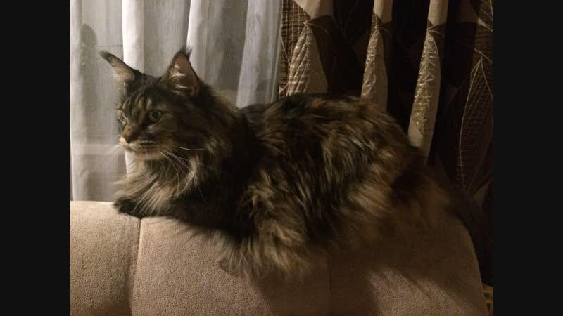 Тетя кошка