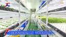 大樓裡種蔬果!科技人跨足植物工廠 種出超夯蔬菜 T觀點 20170423 2/4