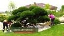 Cięcie artystyczne drzew i krzewów