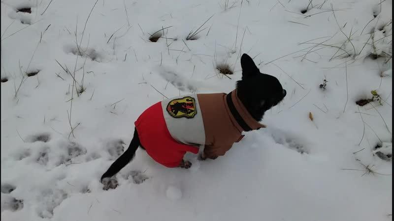 Филька и первый снег