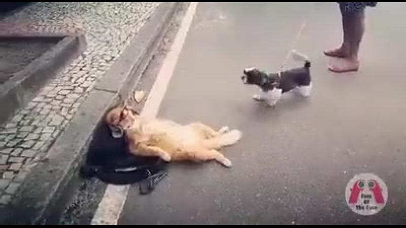 Köpeğin Tepkisine Kılını Bile... -