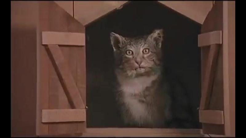 Котик не при делах