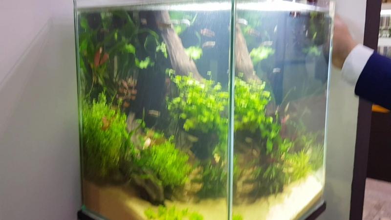 Аквариум Aquael SHRIMP SET SMART 50 50 литров
