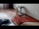 Кот и палас