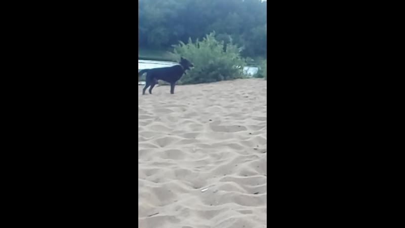 Лойд гуляет на речке