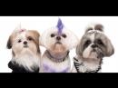 Розыгрыш гигиенической стрижки собаки или кошки 30 08 18