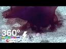 В Южном океане обнаружили безголового монстра с щупальцами - ANews