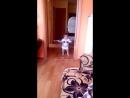 моя младшая Анюта ходит