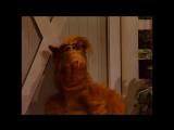 Alf Quote Season 2 Episode 3_ Привет