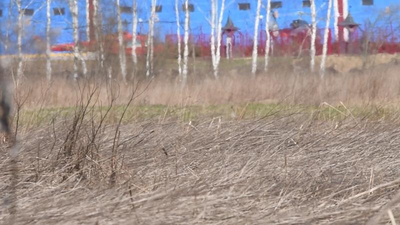 Гуси которых из за марева не видно XD