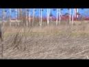 Гуси, которых из-за марева не видно XD