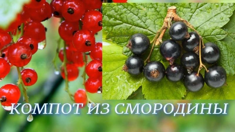 Компот из Красной и Черной смородины / простой способ / полезно и вкусно