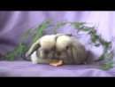 Братцы кролики из питомника Зайкина усадьба. Резервирование.