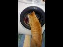 Наш кот стирает белье