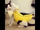 Cat Is Banana - He Is a Banana (Yummy) [Lyric Video]
