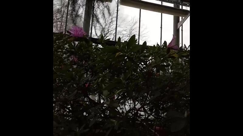 Сад зимой 8-18