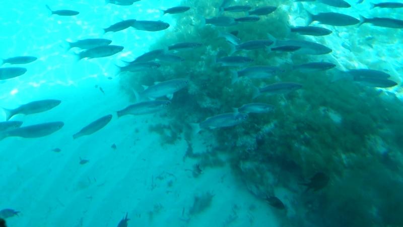 Такая тут чистая вода в море суперская Blue Lagoon Malta