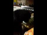 мой кот захотел укропа