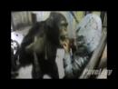 Злая горилла