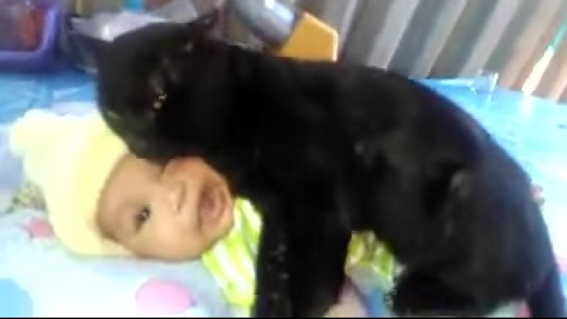 Кот заботится о ребенке это чудо природы смотреть всем