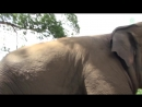 Lazy Baby Elephan Dok Rak Waking Up By The Herd During Nap Time