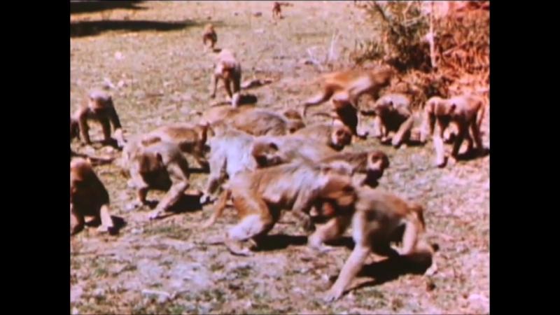 Ancient India (1952)