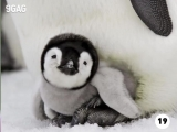 Baby animals that make you go aww. How many cuties can you name in the video?