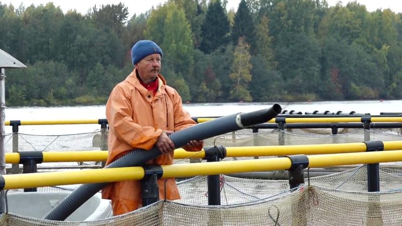 Вологодская область приступила к реализации госпрограммы по поддержке развития аквакультуры