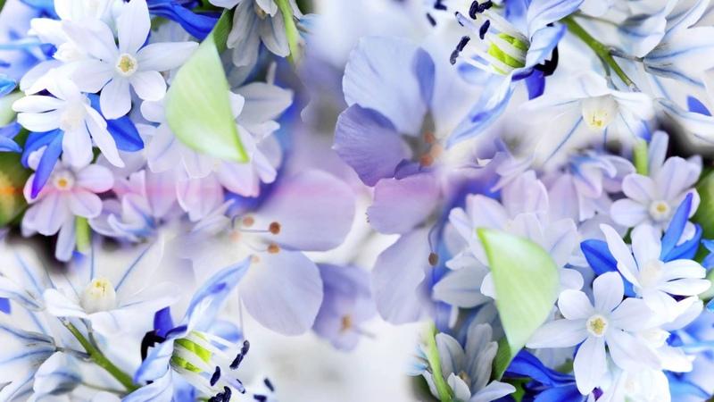 футаж цветы FULL HD
