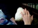 Любит мамину шапку!заяц хайку чувствует!)