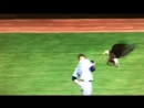 Bald eagle at the Twins home opener lands on Mariners starting pitcher James Paxtons shoulder