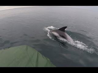 Северные дельфины / Неописуемое зрелище / Northern dolphins / Indescribable sight