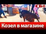 Зачем козел пришел в спортивный магазин - веселое видео