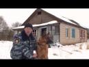 Собака по кличке Граф помогла раскрыть кражу по горячим следам-Ярцево