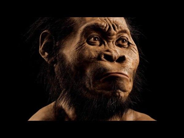 Homo Naledi - открытие, изменившее генеалогическое древо. Рассказывает антрополог Ай ... homo naledi - jnrhsnbt, bpvtybditt utyt