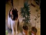 [v-s.mobi]Кот ест коноплю. Последствия.mp4
