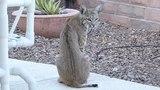Необычный гость на заднем дворе