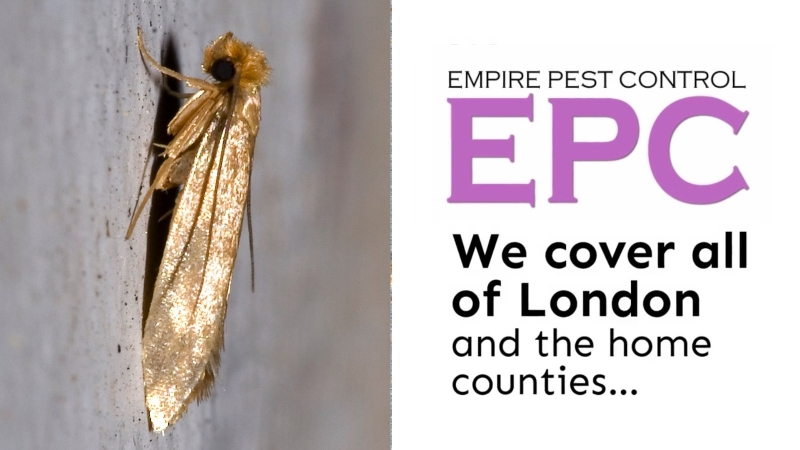 How To Prevent Moths With Empire Pest Control