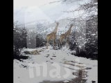 В Южной Африке выпал снег