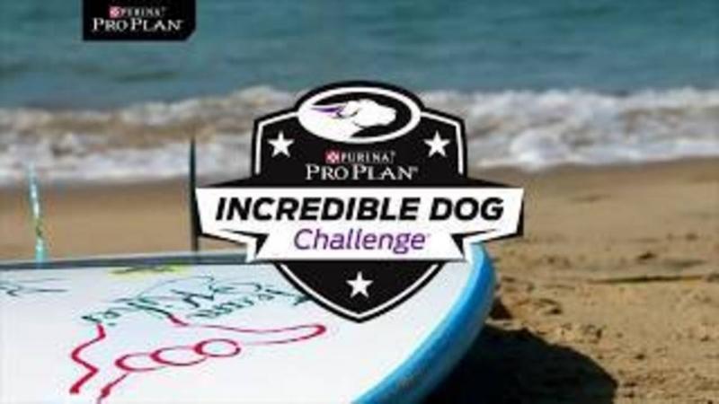 Третий ежегодный чемпионат по серфингу среди собак прошел в Тихом океане недалеко от Сан-Франциско (США) 2018 г.✈🌴☀