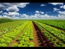 Культиватор для прополки овощей