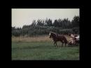 «Туфли с золотыми пряжками» (1976) - музыкальная сказка, реж. Георгий Юнгвальд-Хилькевич
