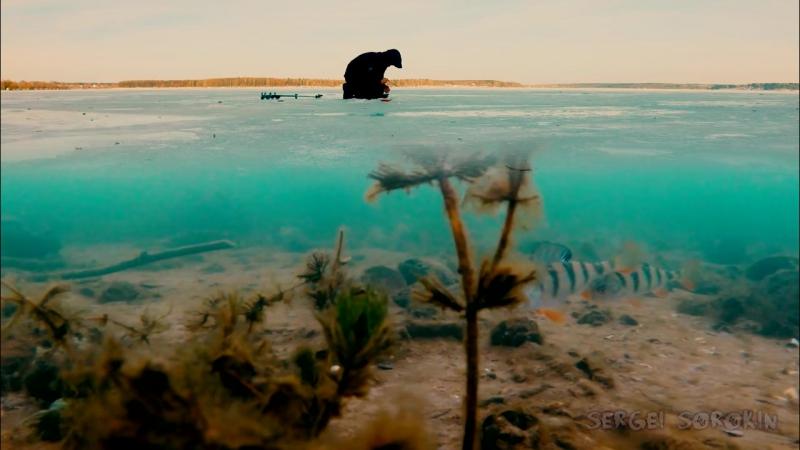 Зимняя рыбалка 2016-2017. Ловля окуня зимой по первому льду на мормышку
