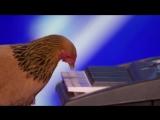 Курица исполнила патриотическую песню на шоу талантов.