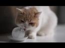 Cat Licks