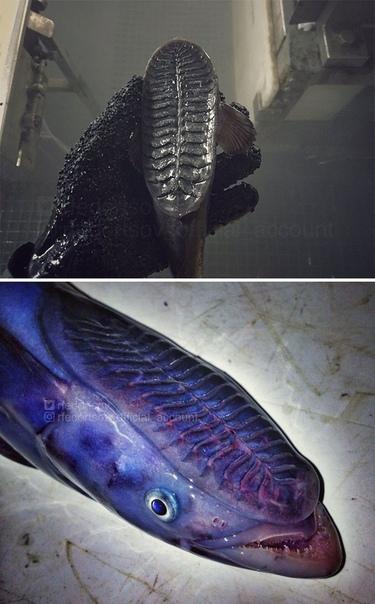 Моряк из Мурманска Роман Федорцов показал новый улов Необычные и невероятные существа с морских глубин от моряка Романа Федорцова. Хорошо,что все это живет на большой глубине,и по своему желанию