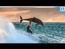 Дельфины «атаковали» серфера
