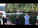 Humpbacks having breakfast at Great Bear