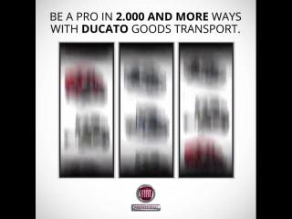 С Fiat Professional ваша ставка всегда выигрышная.