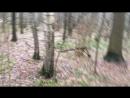 30 12 17 хлюпаем через лес к полю